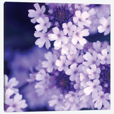 Purple Flowers II Canvas Print #PIS111} by PhotoINC Studio Canvas Artwork