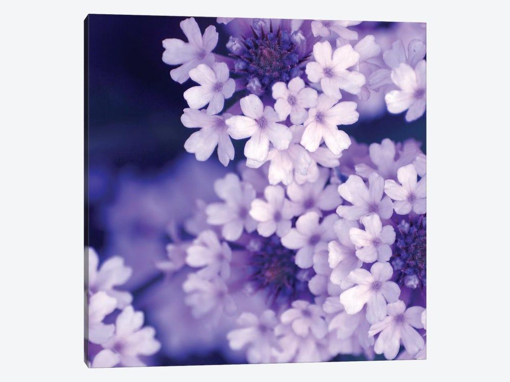 Purple Flowers II by PhotoINC Studio 1-piece Canvas Artwork