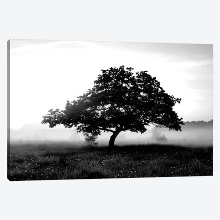 Solemn Tree Canvas Print #PIS137} by PhotoINC Studio Canvas Art Print