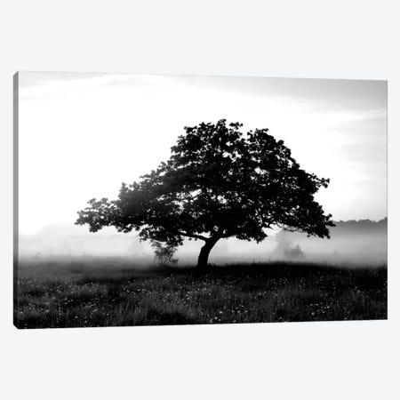 Solemn Tree Canvas Print #PIS137} by PhotoINC Studio Canvas Art Print