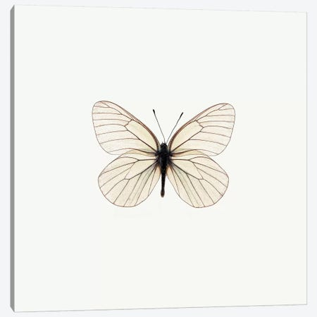 White Butterfly Canvas Print #PIS166} by PhotoINC Studio Canvas Artwork