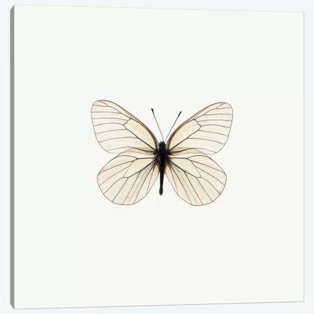 White Butterfly Canvas Print #PIS166} by PhotoINC Studio Canvas Artwork