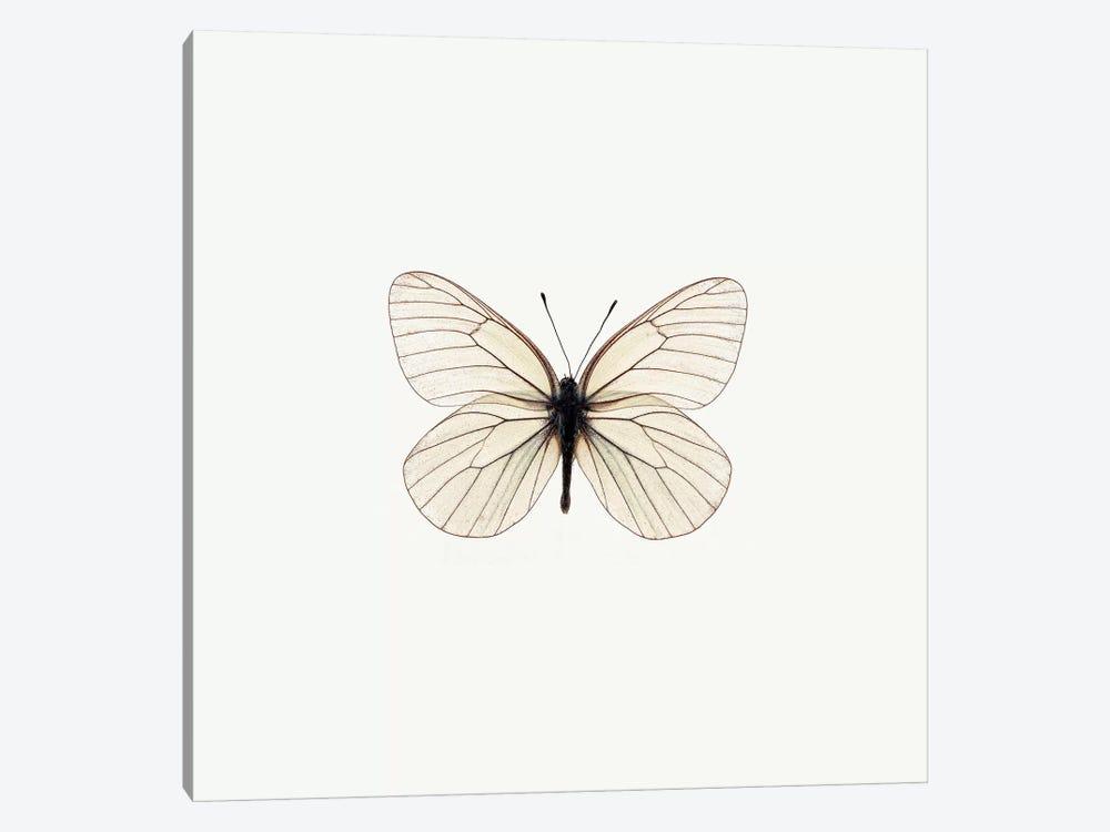 White Butterfly by PhotoINC Studio 1-piece Canvas Art