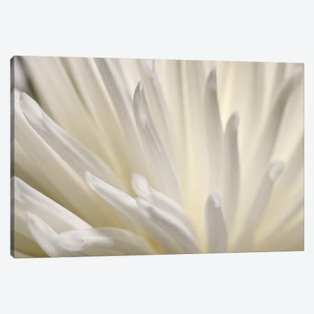 White Flower Canvas Print #PIS167} by PhotoINC Studio Canvas Artwork