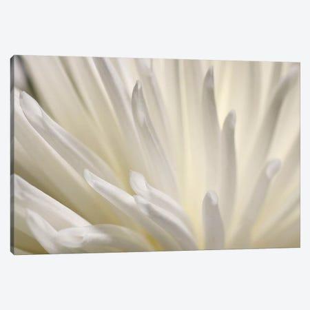 White Flower Canvas Print #PIS167} by PhotoINC Studio Canvas Artwork