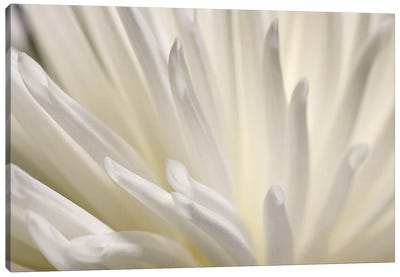 White Flower Canvas Art Print