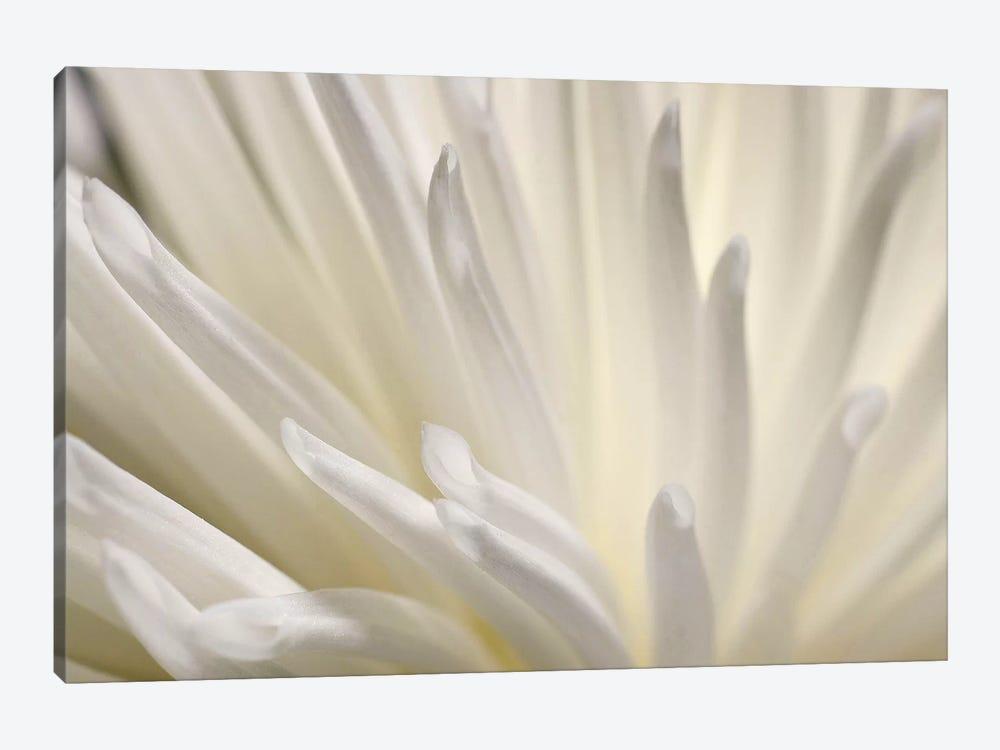 White Flower by PhotoINC Studio 1-piece Canvas Art Print
