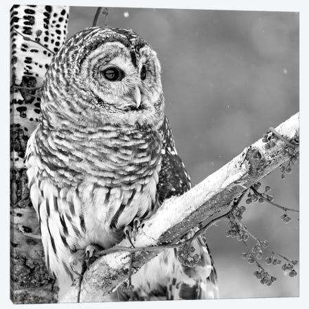 White Owl Canvas Print #PIS168} by PhotoINC Studio Art Print
