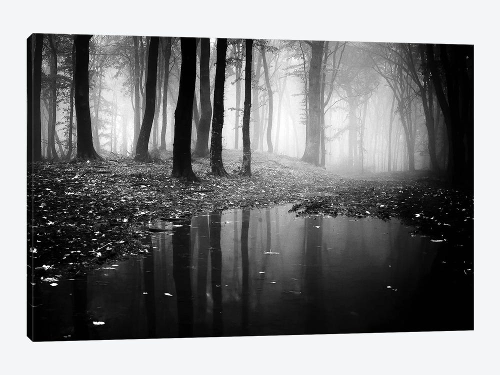 Woods II by PhotoINC Studio 1-piece Canvas Print