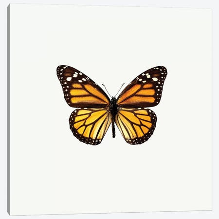 Yellow Butterfly I Canvas Print #PIS176} by PhotoINC Studio Canvas Art Print