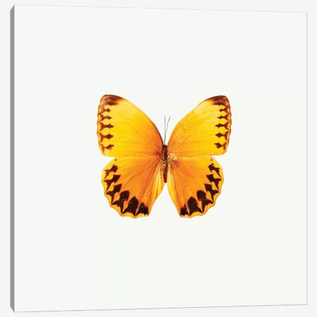 Yellow Butterfly II Canvas Print #PIS177} by PhotoINC Studio Canvas Art Print