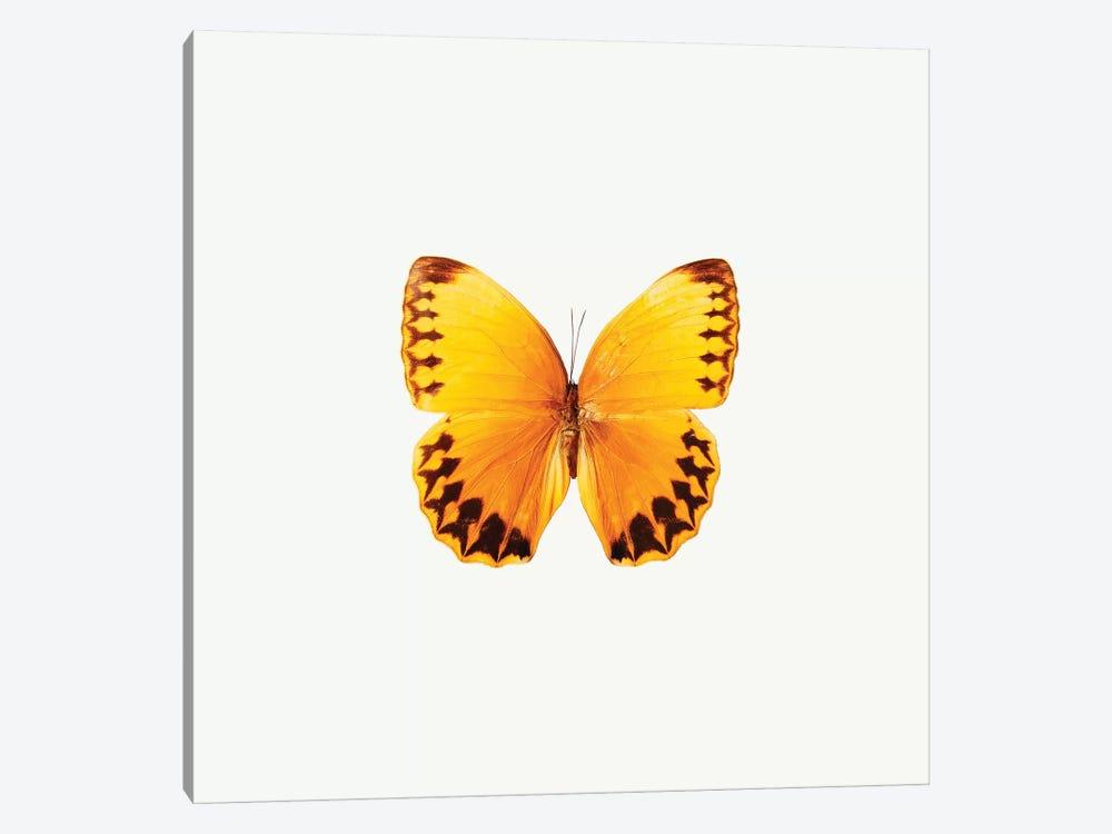 Yellow Butterfly II by PhotoINC Studio 1-piece Canvas Wall Art