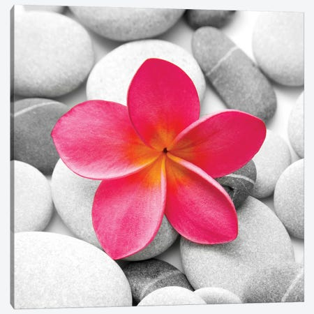 Zen Flower Canvas Print #PIS181} by PhotoINC Studio Canvas Art Print