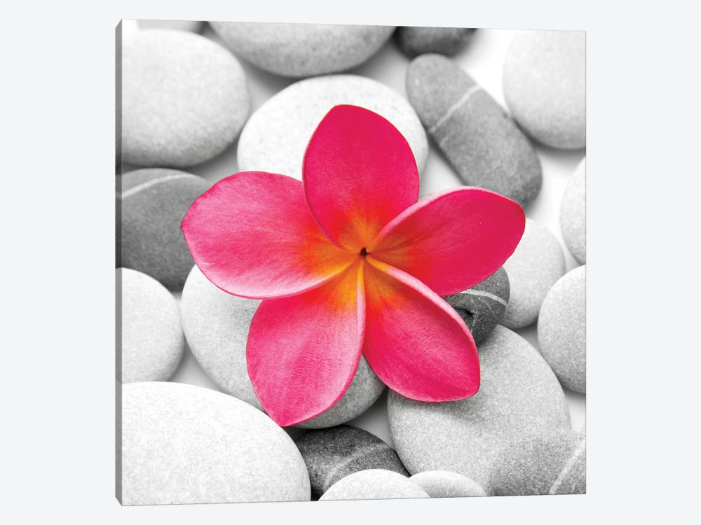 Zen Flower by PhotoINC Studio 1-piece Canvas Print