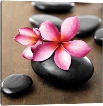 Zen Pebbles IV Canvas Art Print