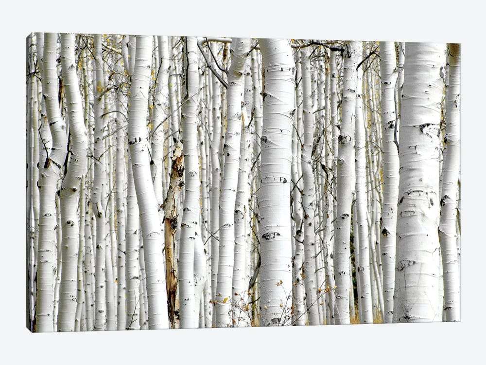 Birch Wood 1-piece Canvas Art