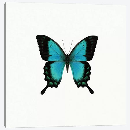 Blue Butterfly Canvas Print #PIS22} by PhotoINC Studio Canvas Artwork