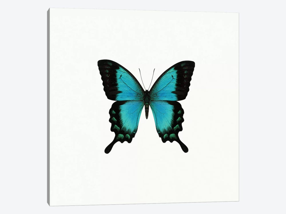 Blue Butterfly 1-piece Canvas Art