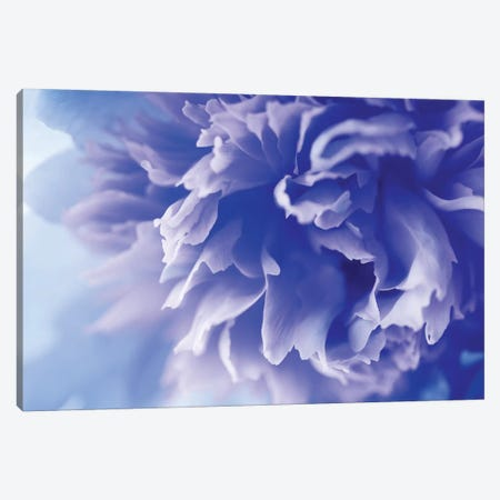 Blue Flower Canvas Print #PIS23} by PhotoINC Studio Canvas Artwork
