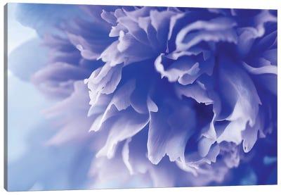 Blue Flower Canvas Art Print