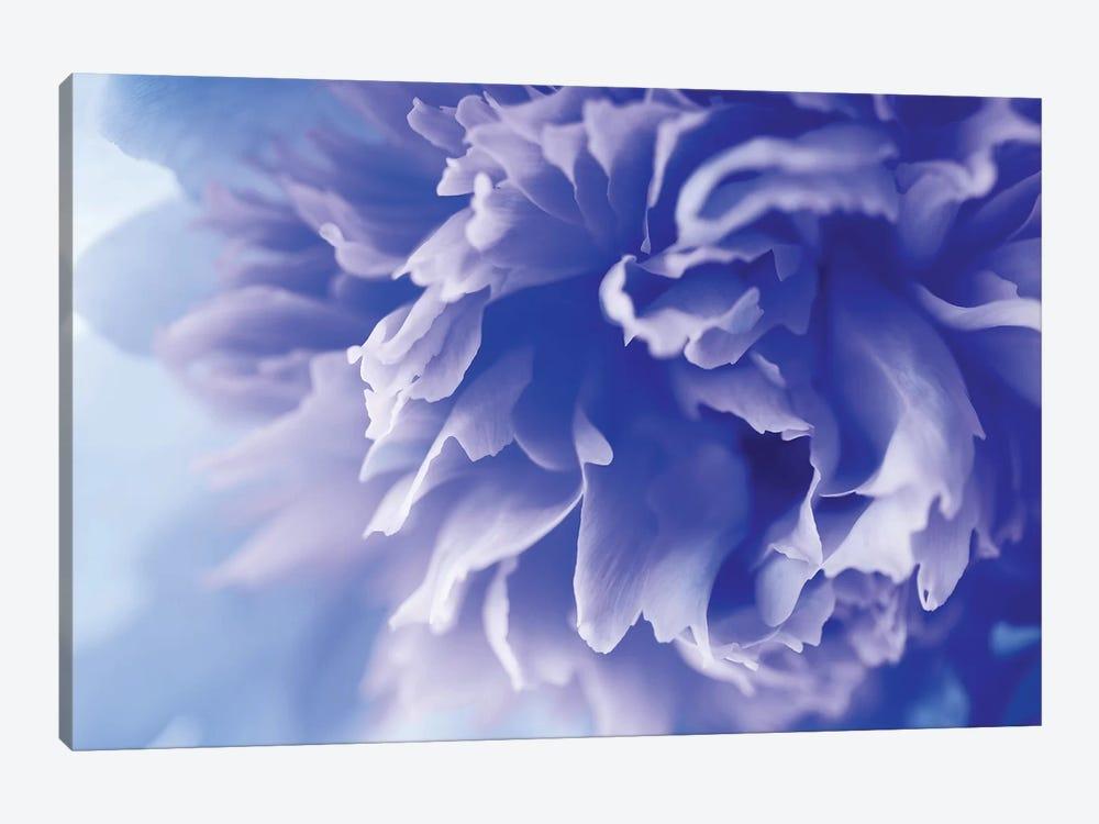 Blue Flower by PhotoINC Studio 1-piece Art Print
