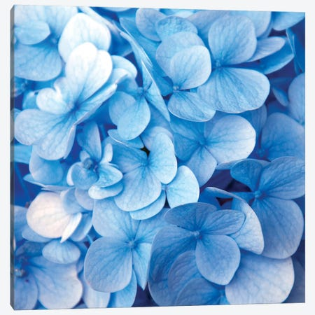 Blue Flowers Canvas Print #PIS24} by PhotoINC Studio Canvas Print