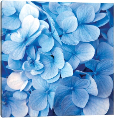 Blue Flowers Canvas Art Print