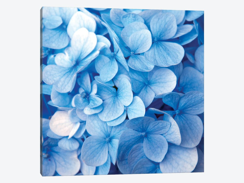 Blue Flowers by PhotoINC Studio 1-piece Canvas Art
