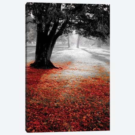 Autumn Contrast Canvas Print #PIS2} by PhotoINC Studio Canvas Print