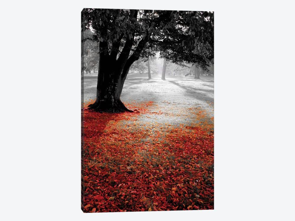 Autumn Contrast by PhotoINC Studio 1-piece Canvas Wall Art