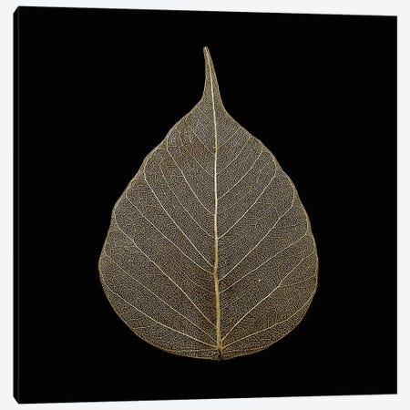 Brown Leaf Canvas Print #PIS31} by PhotoINC Studio Canvas Print
