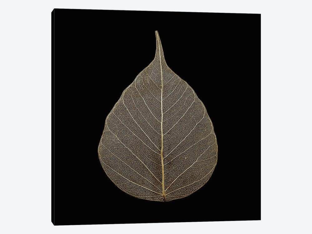Brown Leaf by PhotoINC Studio 1-piece Canvas Art