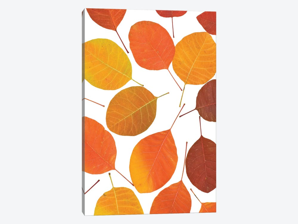 Autumn Leaves 1-piece Canvas Wall Art