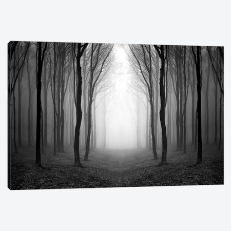 Dark Woods 3-Piece Canvas #PIS50} by PhotoINC Studio Canvas Print