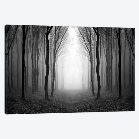 Dark Woods Canvas Print #PIS50} by PhotoINC Studio Canvas Print