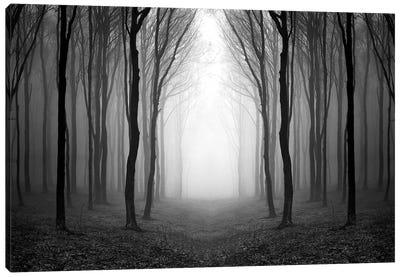 Dark Woods Canvas Art Print