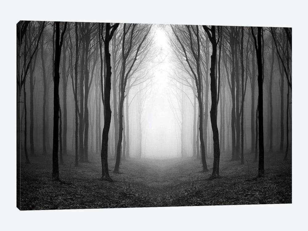 Dark Woods by PhotoINC Studio 1-piece Canvas Print