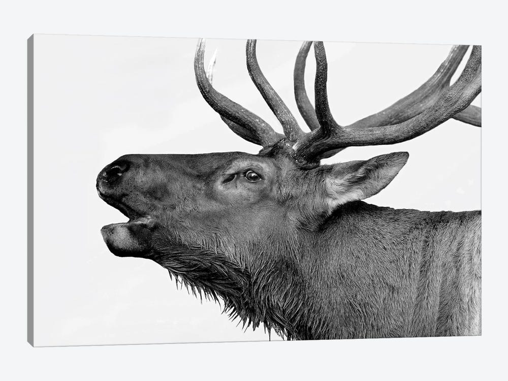 Deer by PhotoINC Studio 1-piece Canvas Wall Art