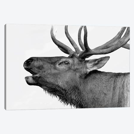 Deer Canvas Print #PIS51} by PhotoINC Studio Canvas Print