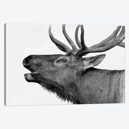 Deer 3-Piece Canvas #PIS51} by PhotoINC Studio Canvas Print