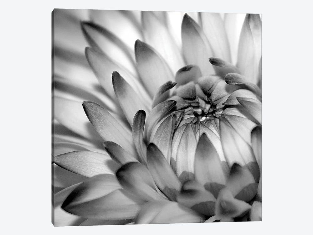 Fibonacci II by PhotoINC Studio 1-piece Canvas Artwork