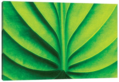 Green Design II Canvas Art Print