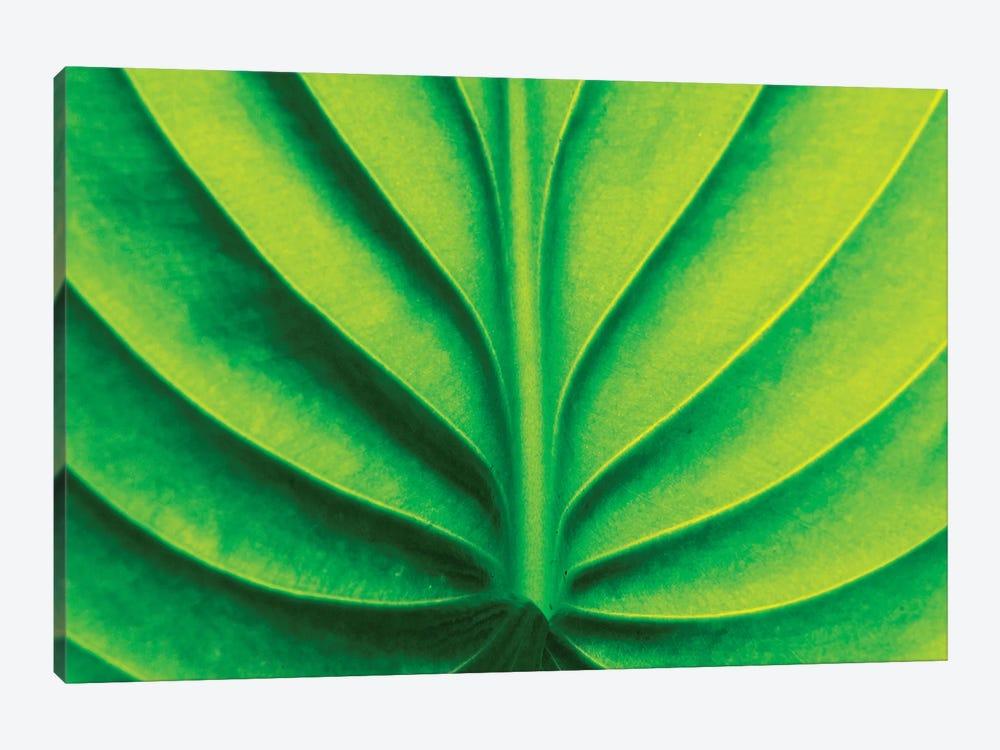 Green Design II by PhotoINC Studio 1-piece Art Print