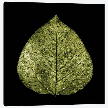 Green Leaf Canvas Print #PIS70} by PhotoINC Studio Canvas Print