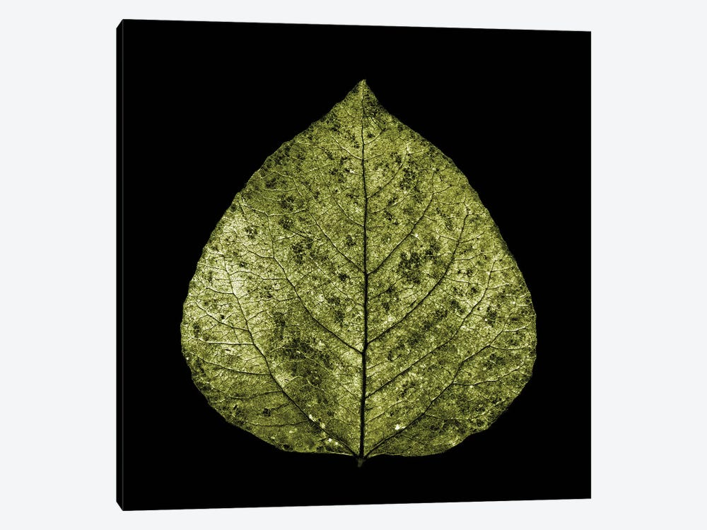Green Leaf by PhotoINC Studio 1-piece Canvas Art Print