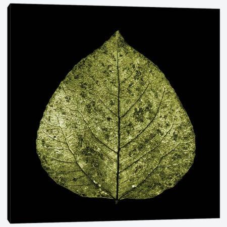 Green Leaf Canvas Print #PIS70} by PhotoINC Studio Canvas Print