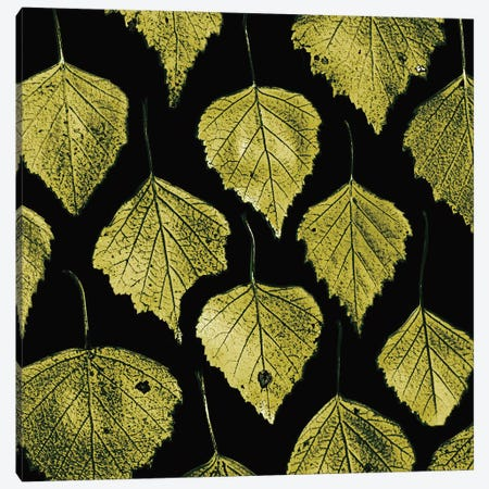 Green Leaves Canvas Print #PIS71} by PhotoINC Studio Canvas Art Print