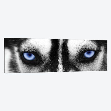 Husky Eyes Canvas Print #PIS73} by PhotoINC Studio Art Print