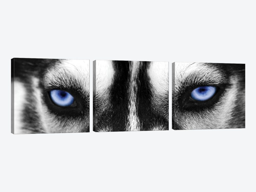 Husky Eyes by PhotoINC Studio 3-piece Canvas Artwork