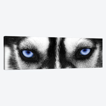 Husky Eyes Canvas Print #PIS73} by PhotoINC Studio Art Print